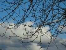 Cieli blu e rami Fotografie Stock
