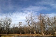 Cieli blu il giorno di inverno freddo Immagine Stock