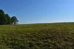 Cieli blu sopra un campo di erba allineato con gli alberi Fotografia Stock