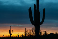 Cieli d'ardore del deserto Fotografie Stock