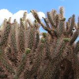 Cieli del cactus Fotografie Stock
