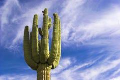 Cieli del Saguaro Immagini Stock