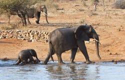 cieli się słonia opuszczać macierzystego waterhole Zdjęcia Stock