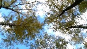 Cielo Árboles giro almacen de metraje de vídeo