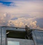 Cielo 3 del cane Immagini Stock