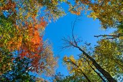 Cielo abierto a través de las hojas coloridas Imagenes de archivo