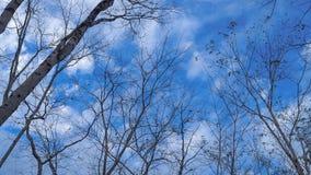 Cielo & alberi immagine stock