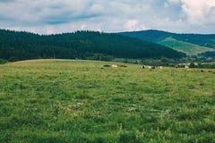 Cielo alpino meraviglioso del withperfect degli altopiani l'Unione Sovietica rurale montagnosa Immagine Stock