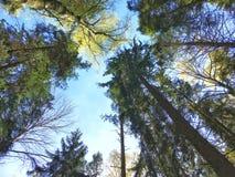 Cielo alto splendido del cielo della spiaggia degli alberi Fotografie Stock Libere da Diritti
