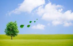 Cielo ambiental de los árboles y de las hojas de la ecología de los conceptos fotografía de archivo