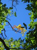 Cielo & alberi Fotografia Stock