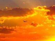 Cielo anaranjado de la puesta del sol con las nubes y el rapaz foto de archivo