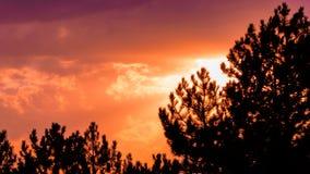 Cielo arancio di tramonto di colore con la siluetta dei pini fotografie stock libere da diritti