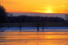 Cielo arancione sopra il campo di mais di inverno Immagini Stock Libere da Diritti