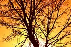 Cielo ardente con l'albero Immagine Stock