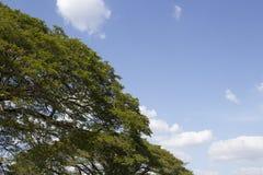 Cielo ascendente del árbol y claro cercano Fotos de archivo libres de regalías
