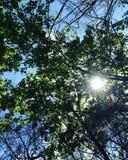 Cielo asoleado Imagen de archivo