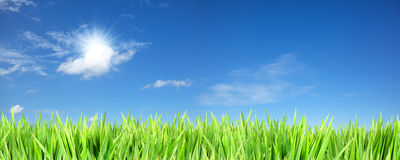Cielo asoleado azul e hierba verde imagen de archivo