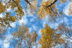 Cielo attraverso gli alberi Fotografie Stock