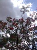 Cielo attraverso gli alberi Fotografia Stock