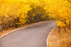 Cielo aumentante di bello Sun con Asphalt Highways Road fotografie stock