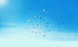 Cielo, aves migratorias Fotos de archivo