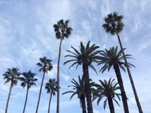 Cielo azul, árbol alto Imágenes de archivo libres de regalías