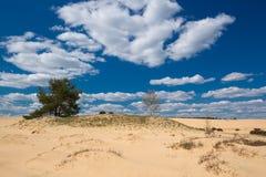 Cielo azul agradable en las dunas en parque el Hoge Veluwe fotografía de archivo