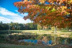 Cielo azul, agua clara, colores hermosos del otoño en el árbol Fotos de archivo libres de regalías