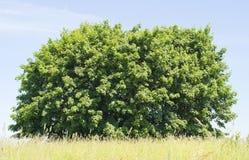 Cielo azul, arbusto verde, hierba amarilla Imagenes de archivo