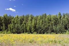 Cielo azul, bosque verde y campo amarillo Foto de archivo