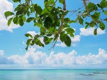 Cielo azul brillante con la playa del mar y la rama de árbol Imagen de archivo