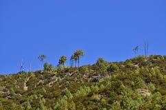 Cielo azul brillante con las nubes blancas hinchadas Imagen de archivo libre de regalías