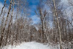 Cielo azul brillante, nubes blancas y nieve fresca en el bosque imagenes de archivo