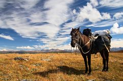 Cielo azul, caballo y montañas. Imagen de archivo