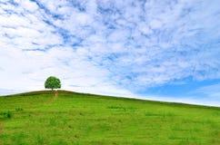 Cielo azul, campos verdes imagen de archivo