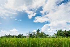 Cielo azul claro agradable en el campo verde imagen de archivo libre de regalías