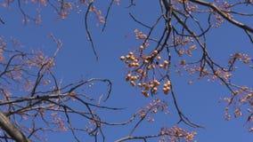 Cielo azul claro a través de ramas de árbol almacen de video