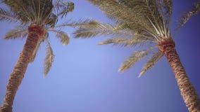 Cielo azul claro y las hojas en el viento de las palmeras
