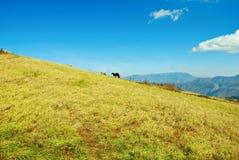 Cielo azul, colina e hierba fotos de archivo