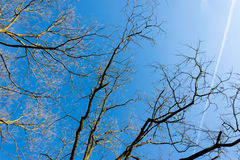 Cielo azul con constricciones y ramas en el borde Foto de archivo