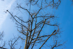 Cielo azul con constricciones y ramas en el borde Fotografía de archivo libre de regalías