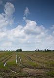 Cielo azul con el campo del padi de los remainds Imagen de archivo