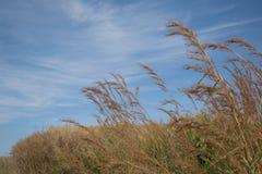 Cielo azul con el fondo de la naturaleza de la planta Foto de archivo