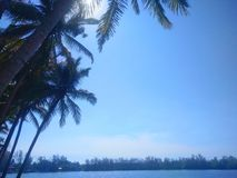 Cielo azul con el ?rbol de coco foto de archivo libre de regalías
