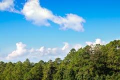 Cielo azul con la nube y el bosque Imagenes de archivo