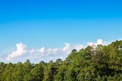 Cielo azul con la nube y el bosque Fotografía de archivo