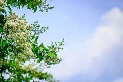 Cielo azul con las floraciones Imágenes de archivo libres de regalías
