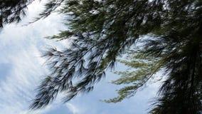 Cielo azul con las hojas del árbol Fotos de archivo libres de regalías