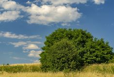 Cielo azul con las nubes blancas sobre prado y arbustos del verano imágenes de archivo libres de regalías
